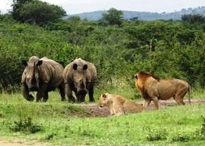Hluhluwe imfolozi tours safaris a
